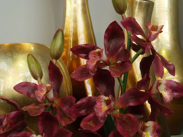 CHARM OF PHALAENOPSIS ORCHIDS
