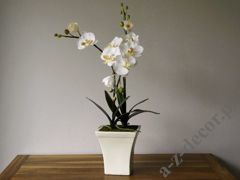 Orchid spray in pot 42,5x77,5cm [AZ00326]