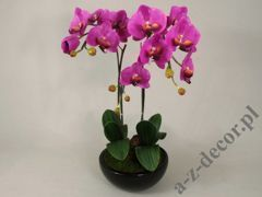 Phalaenopsis in pot 37x65cm [AZ01547]