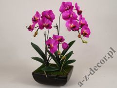 Phalaenopsis in pot 46x66cm [AZ01143]