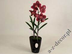 Vanda in pot 21x58cm [AZ01141]
