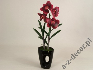 Vanda orchid in pot 58cm [AZ01141]